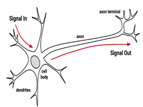 Neural Network Concepts Part 1